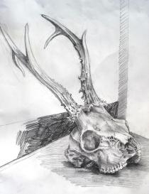 Crâne de chevreuil / Alice Heit