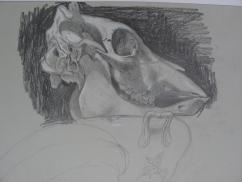 Crâne /Alice Heit
